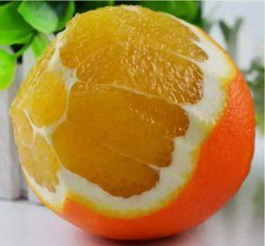 产品广告文案范文600字(之脐橙篇)