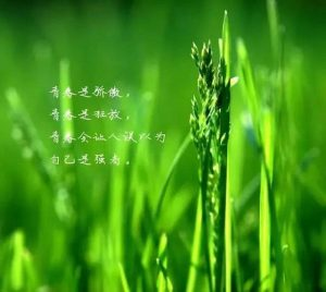 初中生励志演讲稿(1500字)